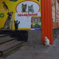 Живая реклама или отдамся в добрые руки....... :: павел Труханов