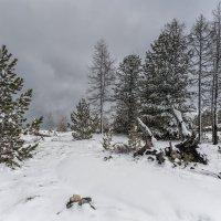 Про снег в мае :: Владимир Колесников