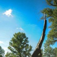 Дерево, обожженное молнией :: Сергей Тагиров