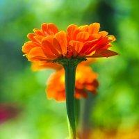 цветок :: ИрЭн Орлова