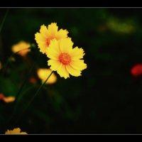 Из серии портреты цветов. :: владимир