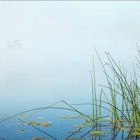 Туман и графика... :: Александр Никитинский