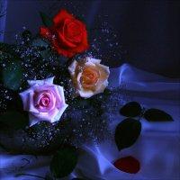 Розы. :: Валерия  Полещикова