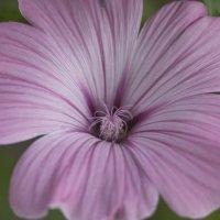 Flower_51 :: Trage
