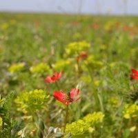 Полевой цветок :: steklotekstolit Пронин