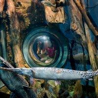 Камера наблюдений в аквариуме :: MVMarina