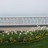 Прекрасные белые тюльпаны... :: Svet Lana