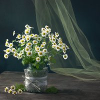Хризантемы. :: ЛЮБОВЬ ВОЛГИНА