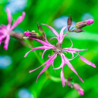 Полевые цветы :: Андрей Куприянов