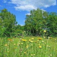 Лето радует теплом, Нежностью и цветом! :: Galina Dzubina
