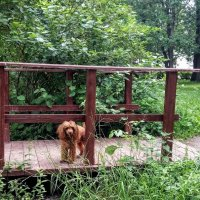 Шел через мосточек, ухватил... травинку. :: Larisa Ereshchenko