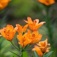 цветы в ботсаду Владивостока :: Дмитрий
