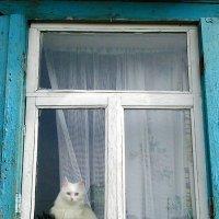 Дачная принцеса в окошке :: Владимир Ростовский