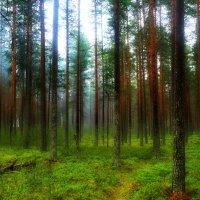 Утром в лесу :: Владимир Брагилевский