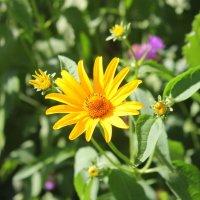 Солнечный цветок. :: Валентина ツ ღ✿ღ