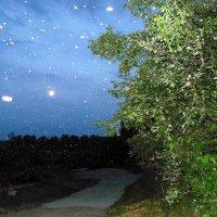 Ночь , метлячки летают. :: Мила Бовкун