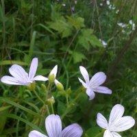 Полевые цветы. :: Татьяна ❧