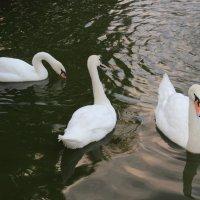 Белые вороны :: Леонид