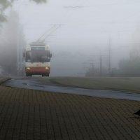 Утро туманное. Троллейбус и первый пешеход :: Владимир Максимов