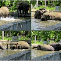 Летним днём в ростовском зоопарке :: Нина Бутко