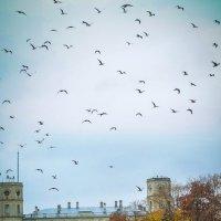 Птицы :: Евгения Кирильченко