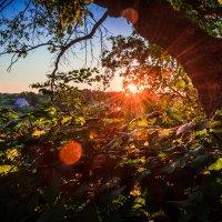 Восход солнца :: Kirill Stupakov