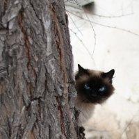 Я злой и страшный ... :: Сергей