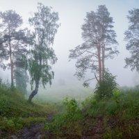 Туманное утро :: Виталий Истомин