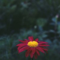 цветок :: Валерия Беськаев