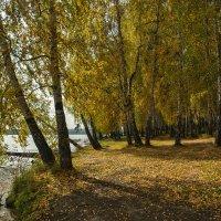Березовая осень :: vladimir Bormotov