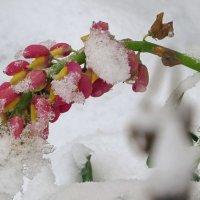 снежок :: валя