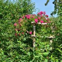 Roses :: Юрій Федчак