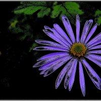 Голубая ромашка :: Нина Корешкова