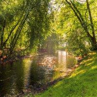 Лесная река :: Smirnov Aleksey Смирнов