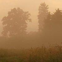 Дерево.. :: Владимир Гилясев