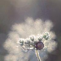 Под облаками :: Olga Verenich