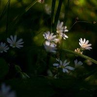 милые цветочки :: Маришка Ведерникова