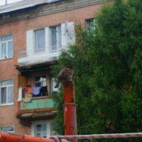 сосед :: Alexandr Staroverov