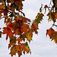 Осенние листья :: Владимир Брагилевский