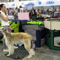 В ожидании (за пределами ринга на выставке собак) :: Irina Shtukmaster