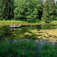 Зарастающий пруд :: Наталья Лунева