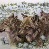Волки :: rv76