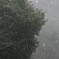 А просто летний дождь прошел.... :: Елена Миронова