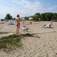 Уличные наблюдения: Пляжное знакомство начинается с обнюхивания... :: Алекс Аро Аро