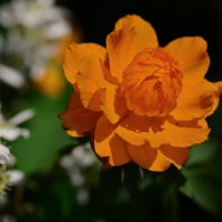Лесная роза :: Татьяна Соловьева