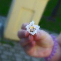 маленький цветок :: Stas Beloglazov