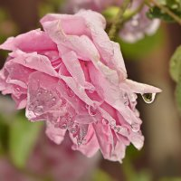 после дождя :: Svetlana Galvez