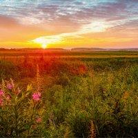 В лучах вечернего солнца... :: Александр Никитинский