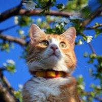 Коты прилетели 2 :: Татьяна Евдокимова