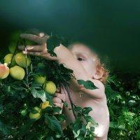 Сбор урожая :: Yulia Bruk